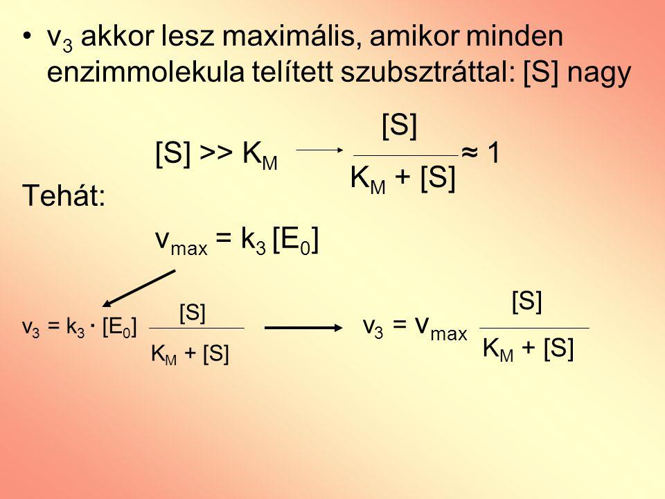 v3 akkor lesz maximális, amikor minden enzimmolekula telített szubsztráttal: [S] nagy